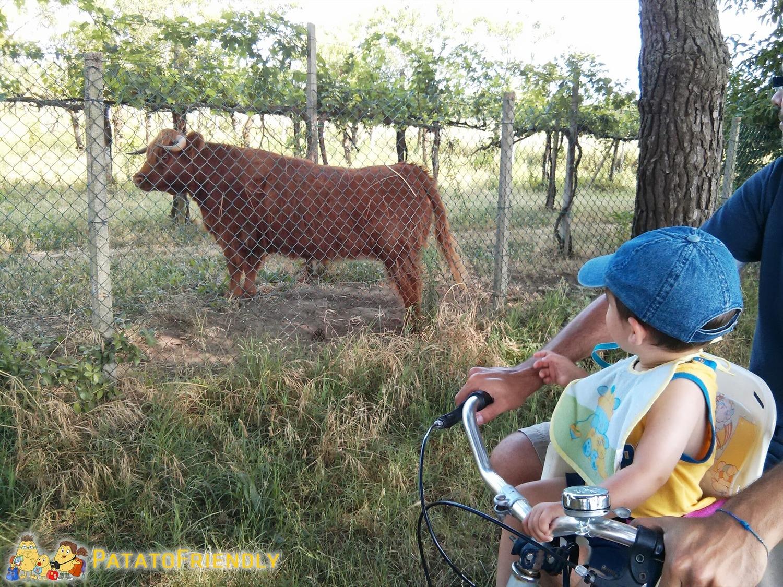 [cml_media_alt id='8122']Cicloturismo a Bibione - In Bici con Patato[/cml_media_alt]