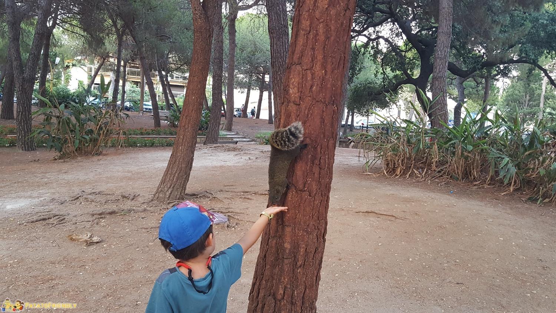 [cml_media_alt id='8351']La colonia di scoiattoli a San Juan Les Pins[/cml_media_alt]