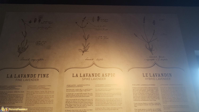 Il Museo della Lavanda di Coustellet - I vari tipi di Lavanda