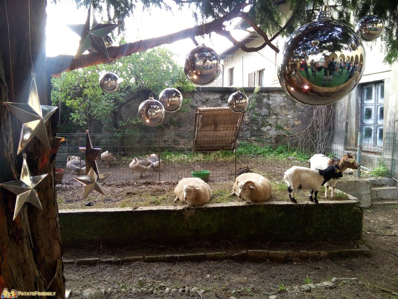[cml_media_alt id='8838']La Casa Bergamasca di Babbo Natale: Gli animali della fattoria[/cml_media_alt]
