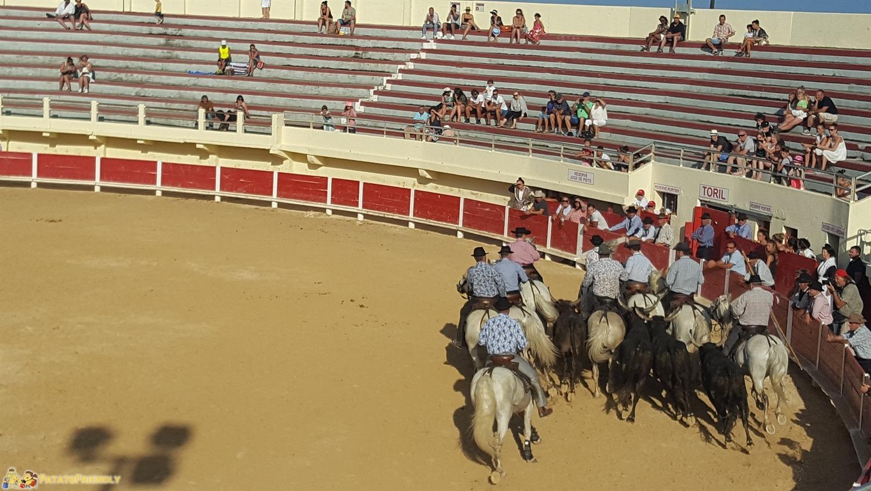 Itinerario in Camargue con bambini - Le corride non violente con i tipici tori neri e i cavalli bianchi