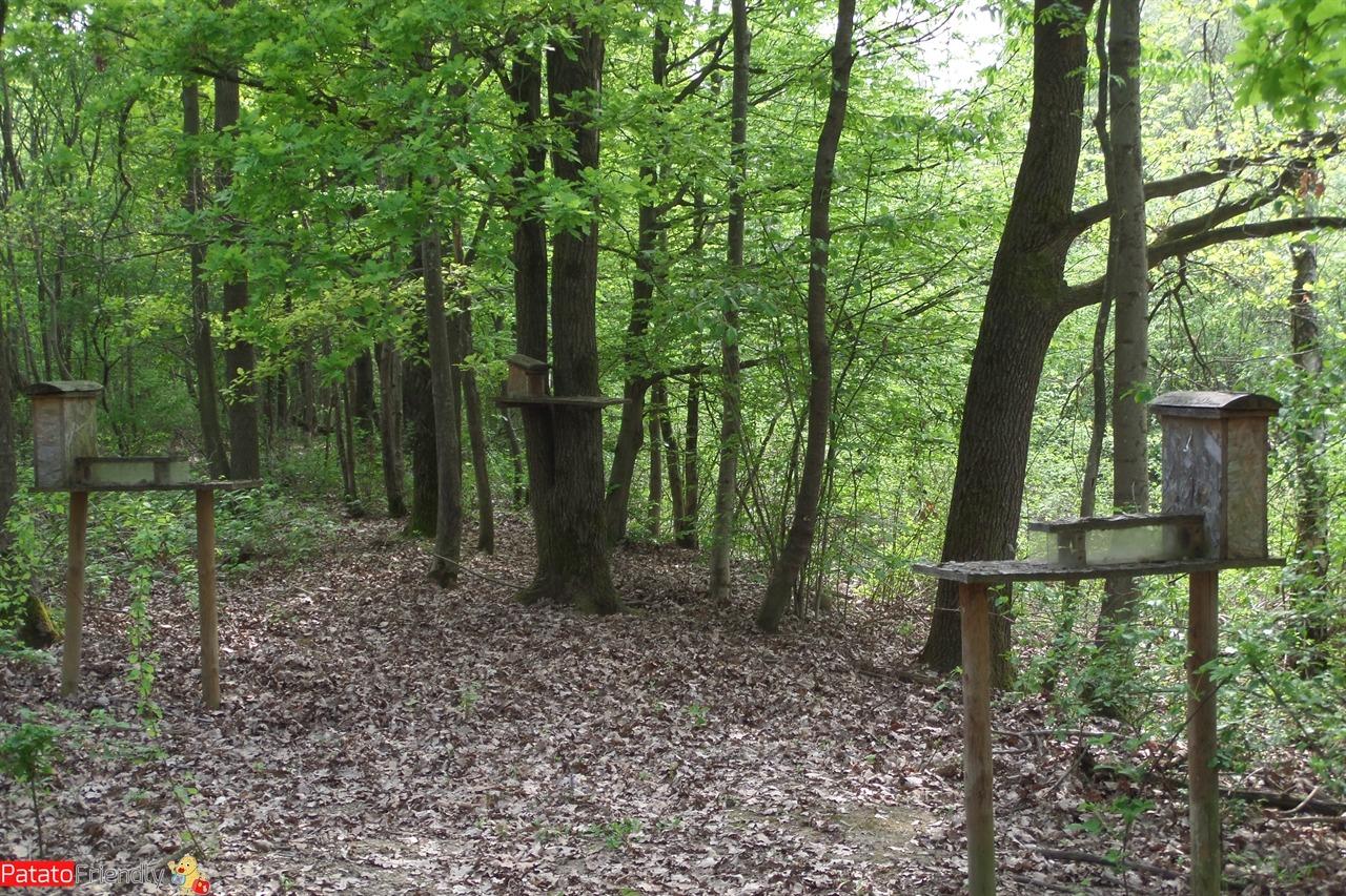 [cml_media_alt id='11221']Cosa vedere al Parco della Mandria - gli scoiattoli[/cml_media_alt]