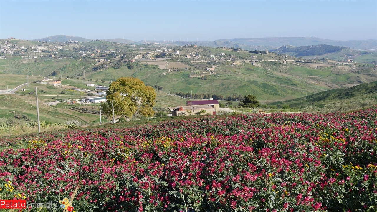 [cml_media_alt id='10657']Itinerario in auto in Sicilia - Le strade fiorite verso Favara[/cml_media_alt]