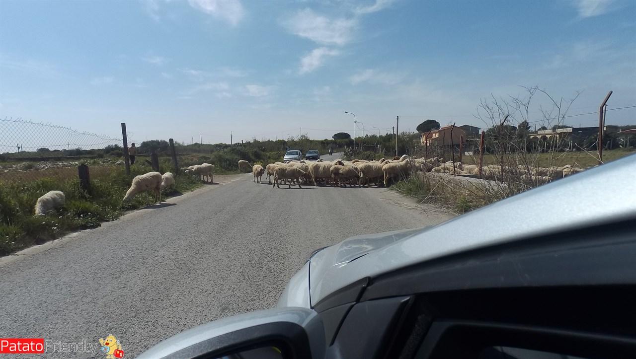 [cml_media_alt id='10662']Itinerario in auto in Sicilia - Un gregge di pecore nella campagna di Ragusa[/cml_media_alt]