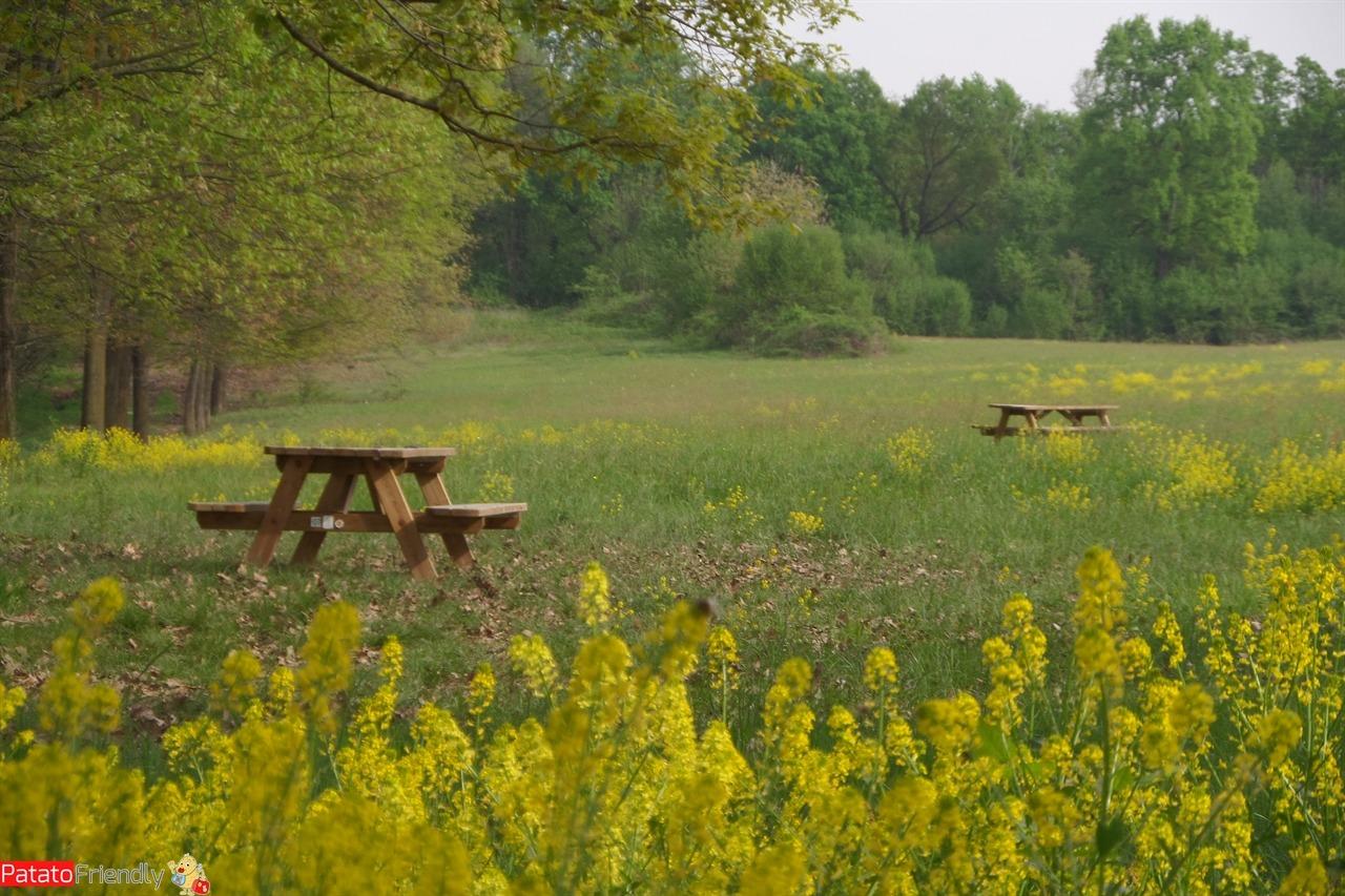 [cml_media_alt id='11227']Un pic-nic al Parco della Mandria - aree attrezzate[/cml_media_alt]
