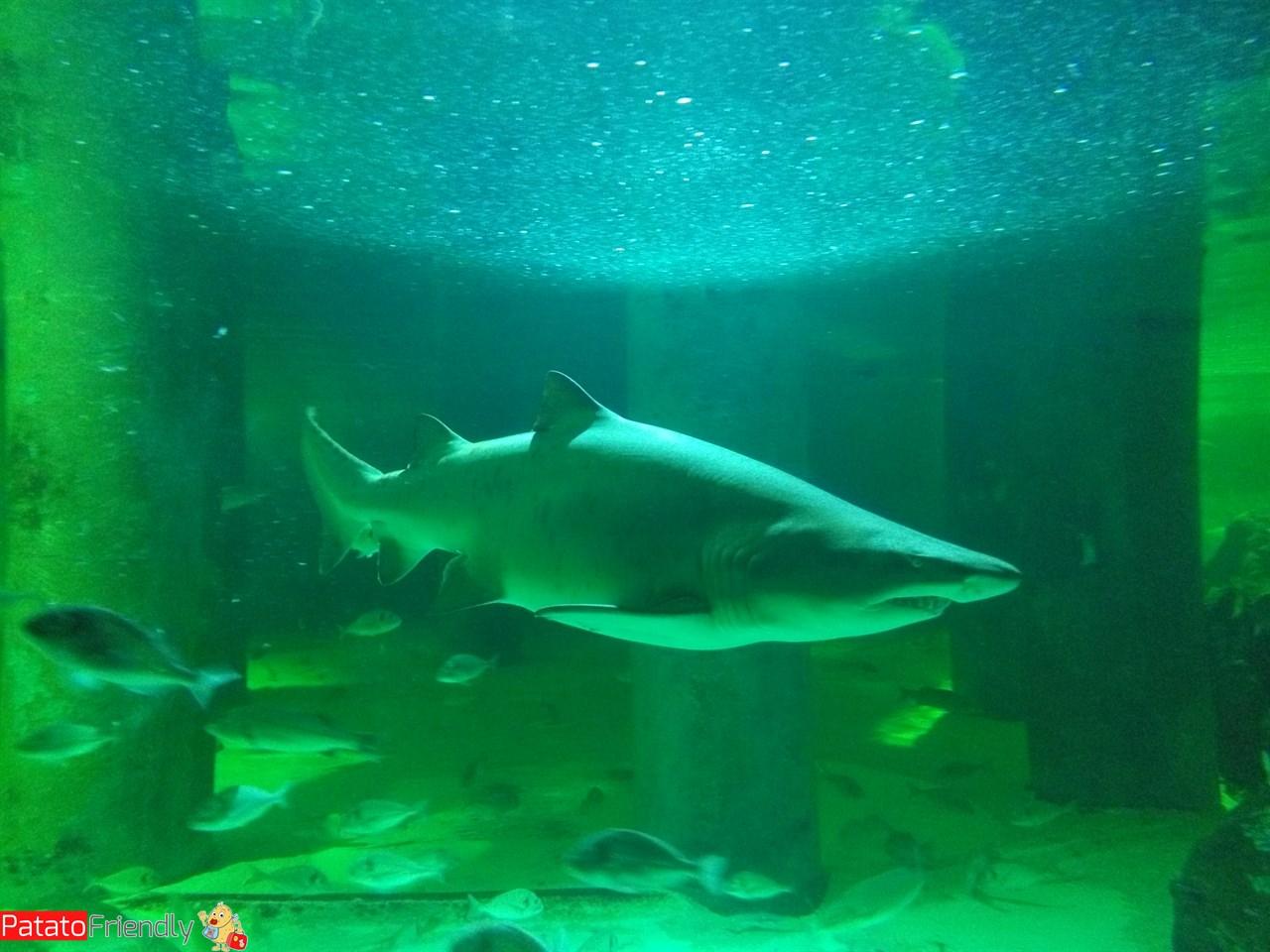 Acquario di Cattolica - Lo squalo