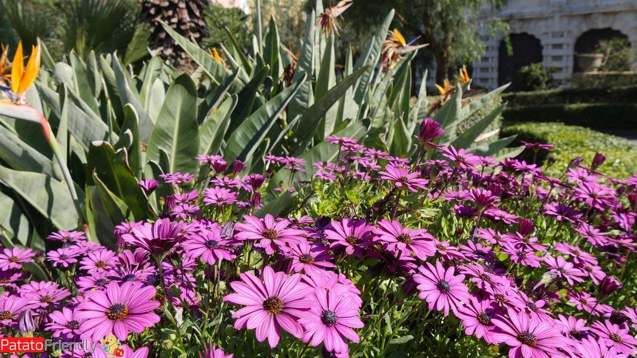 [cml_media_alt id='10584']La primavera a Catania[/cml_media_alt]