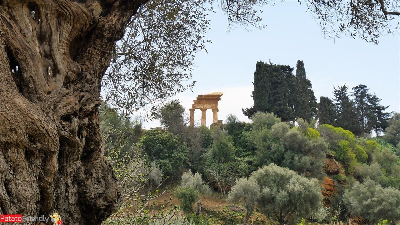 Agrigento - vedere il Giardino della Kolymbetra