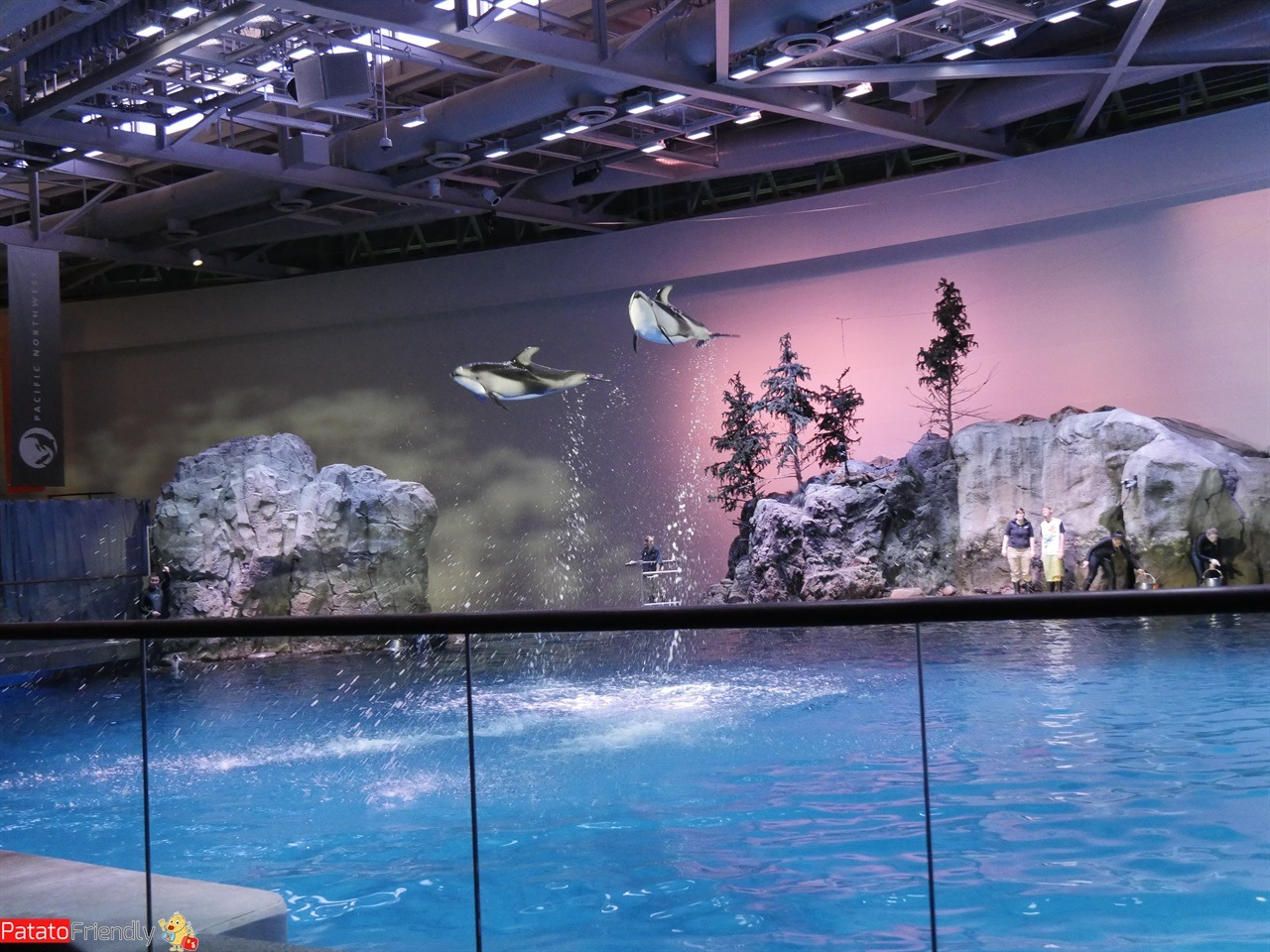 [cml_media_alt id='11594']Chicago - L'incredibile spettacolo dei delfini allo Shedd[/cml_media_alt]