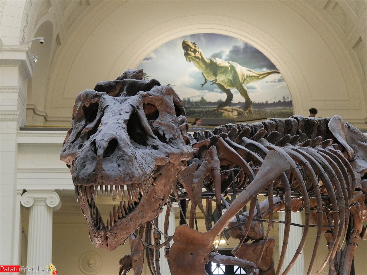 Chicago - Sue il T-Rex del Field Museum