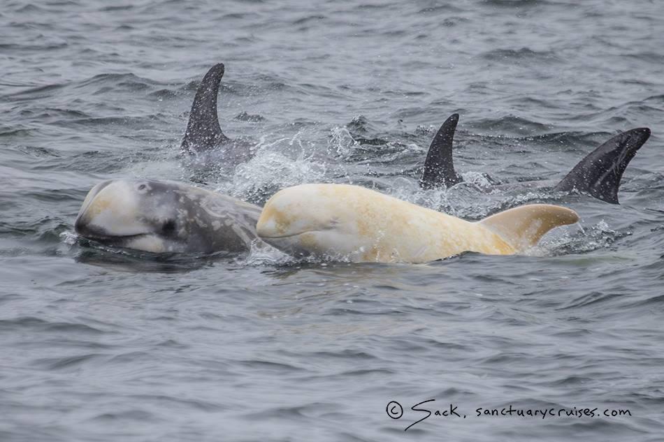 Vedere le balene in California - credits Sanctuary Cruises