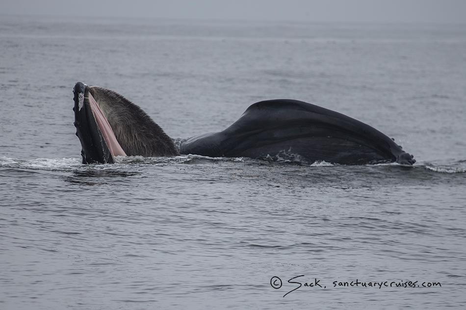 [cml_media_alt id='12169']Vedere le balene in California - credits Sanctuary Cruises[/cml_media_alt]