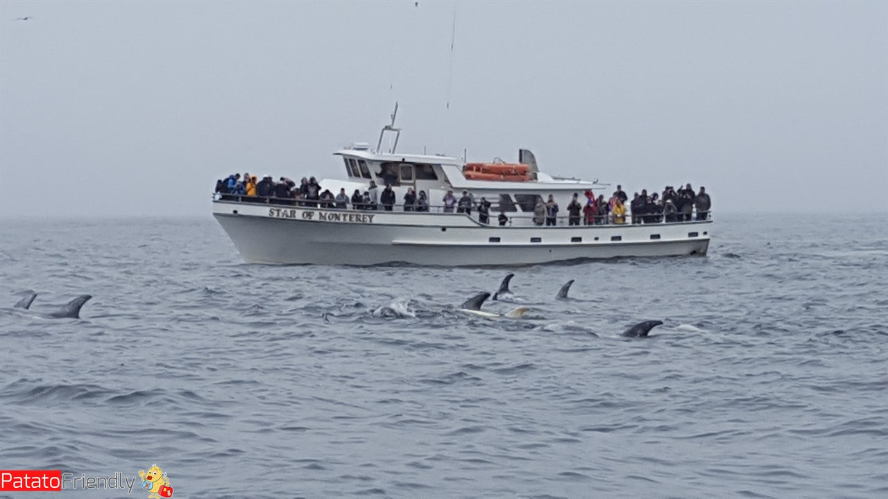 [cml_media_alt id='12174']Escursione in barca - whale watching in California[/cml_media_alt]