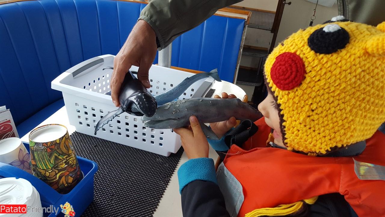 [cml_media_alt id='12175']Escursione in barca per vedere le balene con un bambino[/cml_media_alt]
