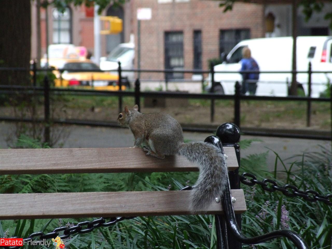 [cml_media_alt id='11835']New York con la famiglia - gli scoiattoli a Central Park[/cml_media_alt]