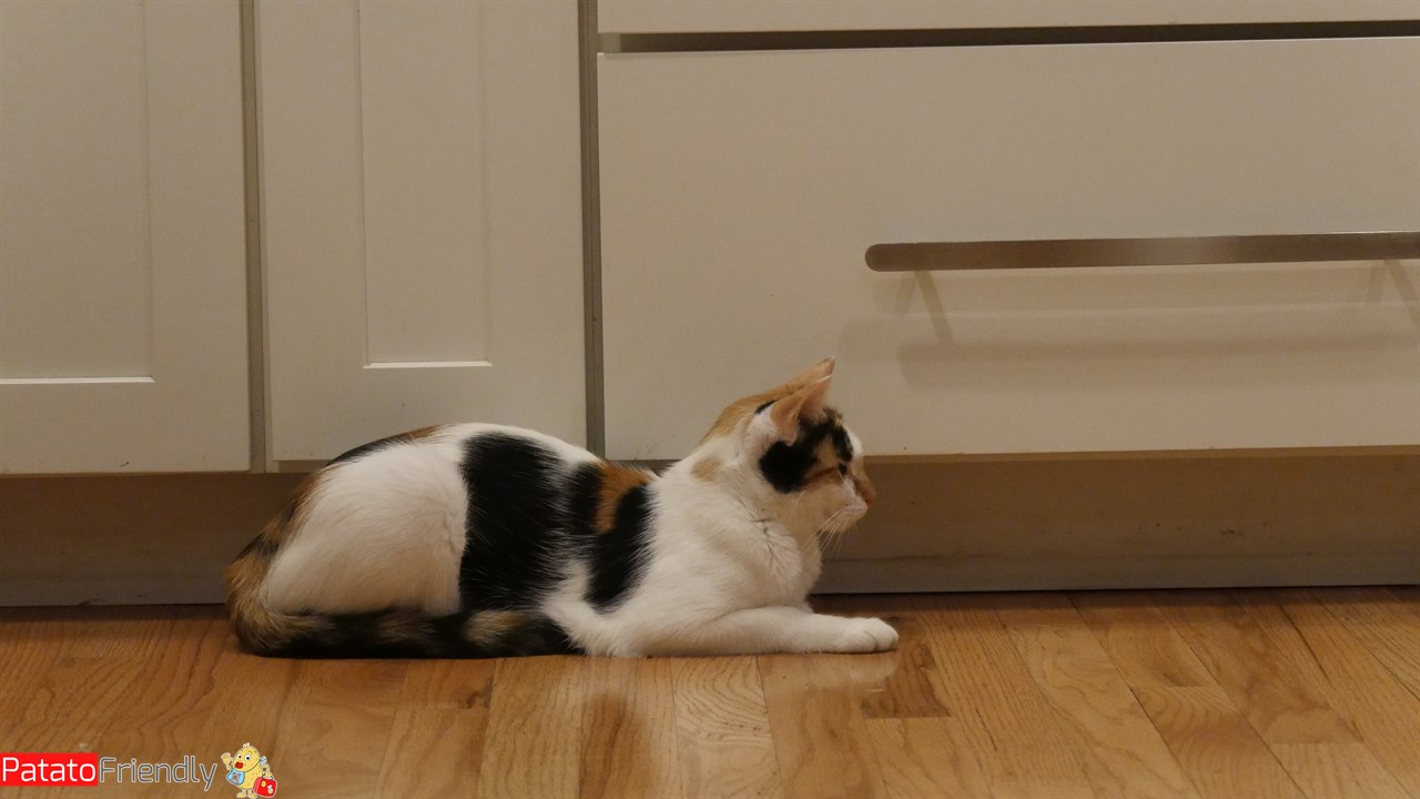 [cml_media_alt id='12192']Scambio casa - uno dei nostri gatti in scambio[/cml_media_alt]