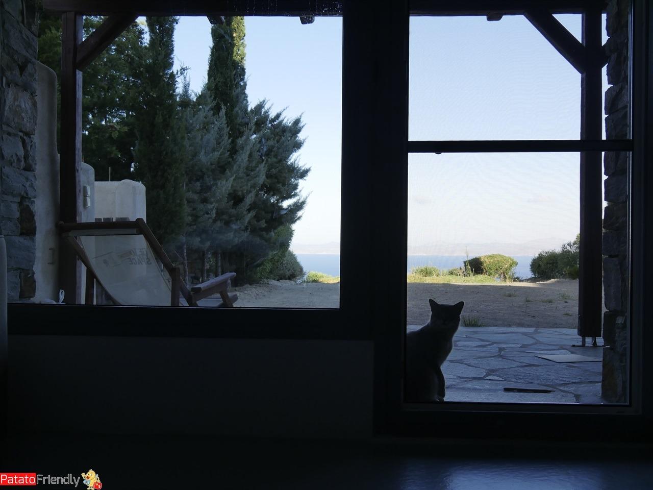 [cml_media_alt id='12229']Isola di Kea - La nostra casetta con il gatto Ikeo che ci fa compagnia[/cml_media_alt]