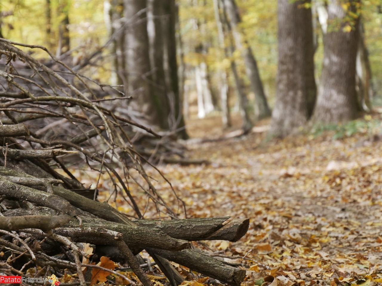 [cml_media_alt id='12714']Foliage Montevecchia - Ca Soldato[/cml_media_alt]
