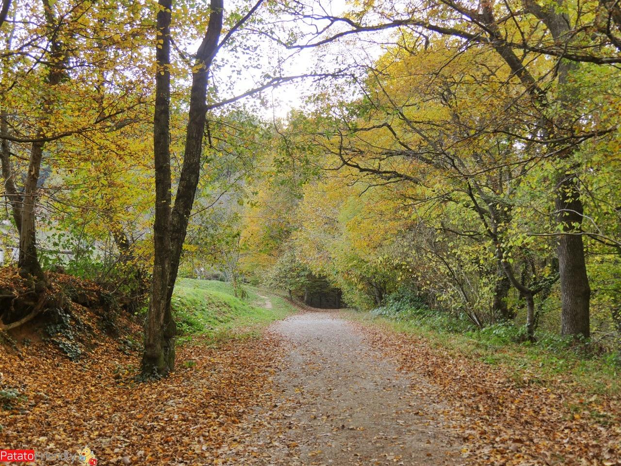 [cml_media_alt id='12716']Vedere il Foliage a Montevacchia - Ca Soldato (2)[/cml_media_alt]