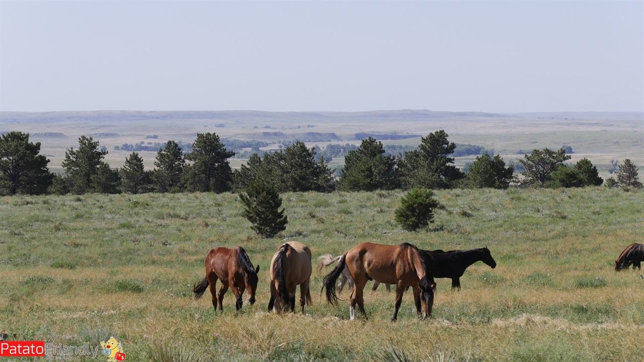 Una mandria di cavalli selvaggi del Wild Sanctuary
