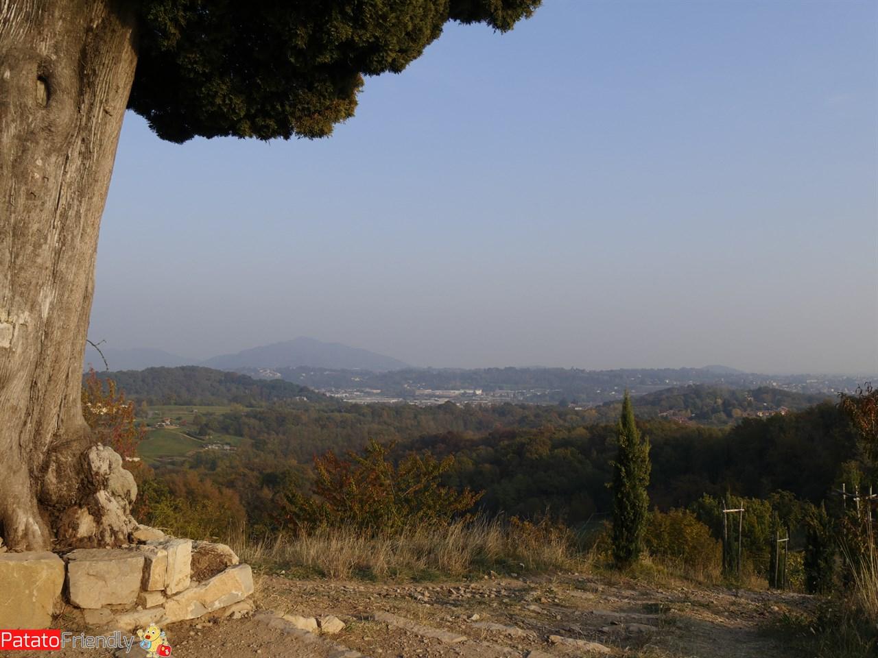 Il panorama dalla cima dei cipressi - Parco del Curone