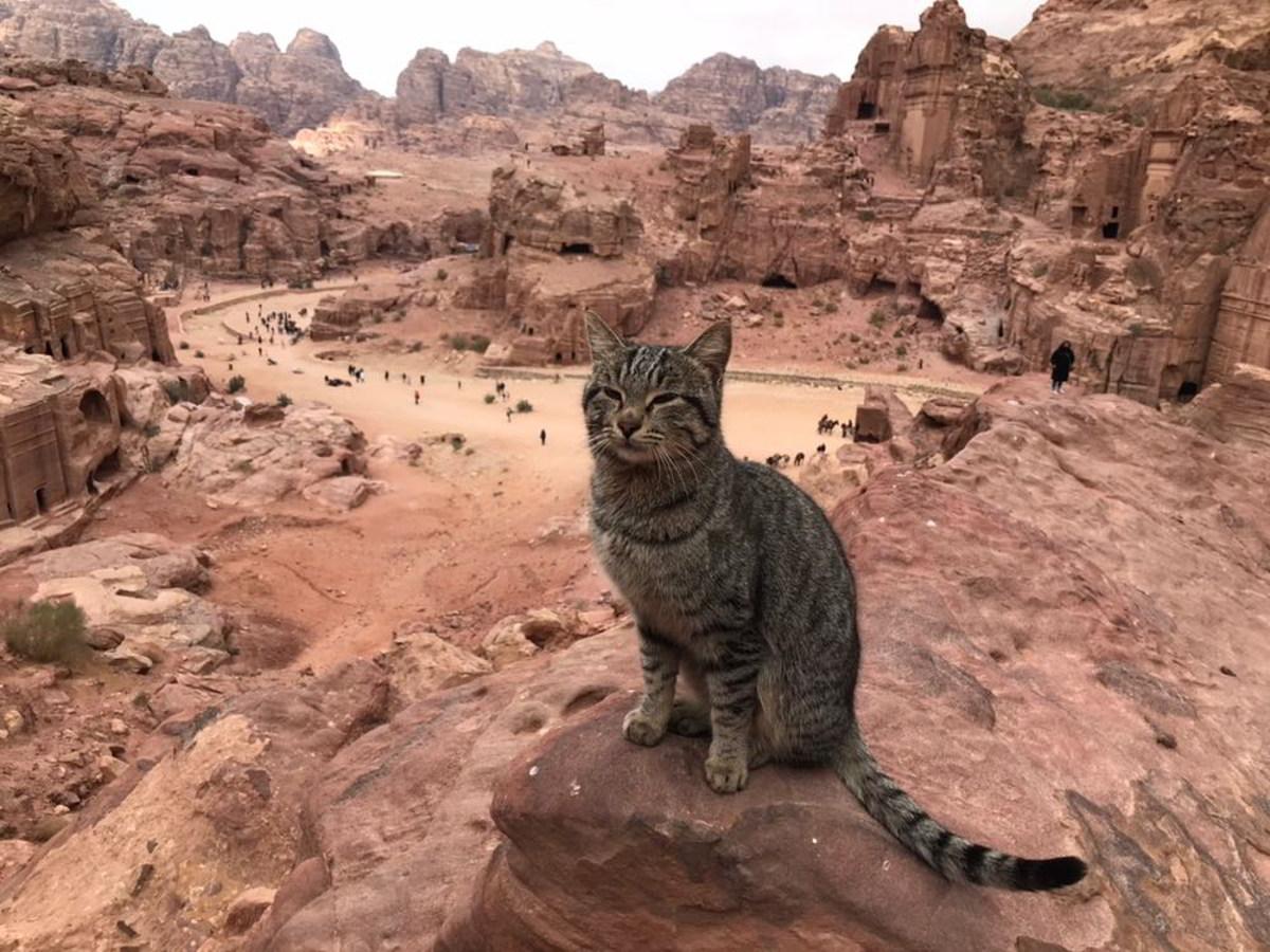 [cml_media_alt id='13346']Viaggio in Giordania Petra e il gatto[/cml_media_alt]