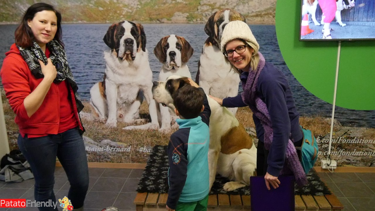 [cml_media_alt id='13322']Accarezzare i cani San Bernardo a Martigny[/cml_media_alt]