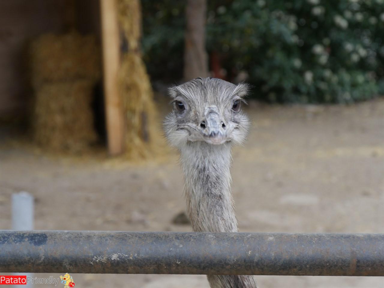 [cml_media_alt id='13675']Nizza coi bambini - gli animali del Parc Phoenix[/cml_media_alt]