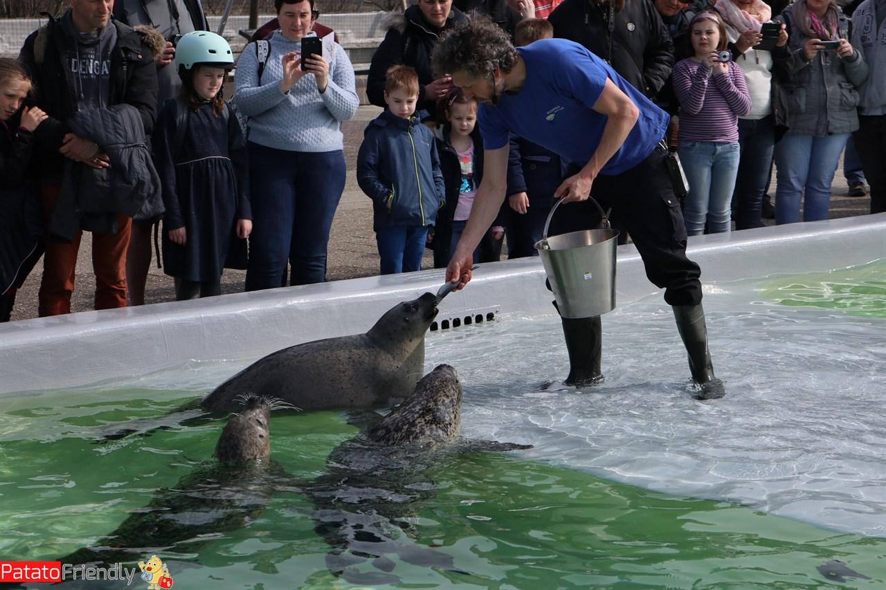 [cml_media_alt id='13975']Texel coi bambini - Ecomare e foche[/cml_media_alt]