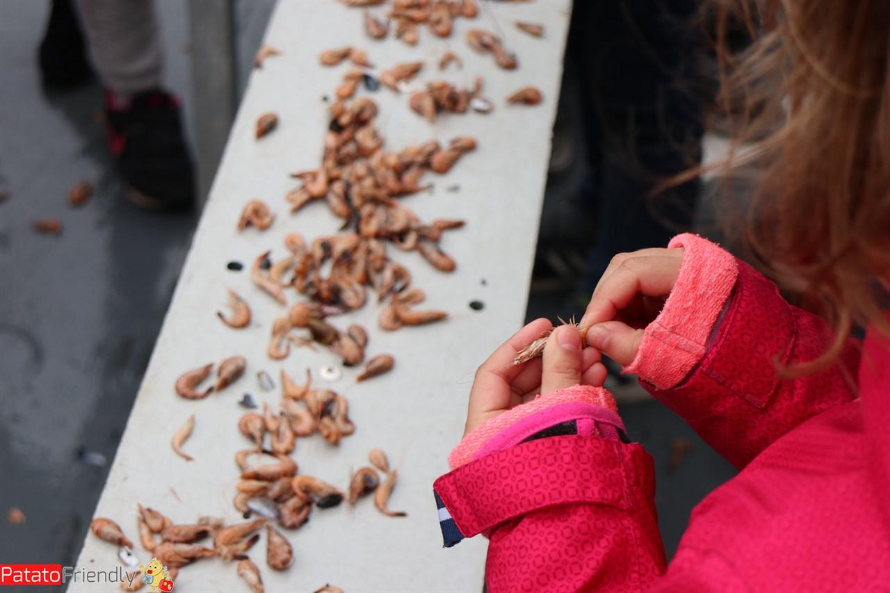 [cml_media_alt id='13965']Texel coi bambini - pesca dei gamberetti[/cml_media_alt]