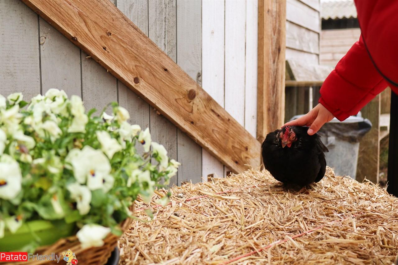 [cml_media_alt id='13966']Texel coi bambini alla fattoria con le galline[/cml_media_alt]