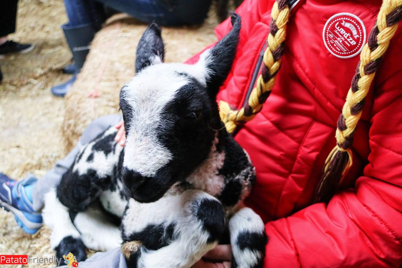 [cml_media_alt id='13967']Texel coi bambini alla fattoria[/cml_media_alt]