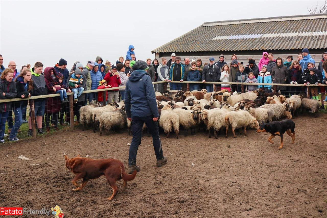 [cml_media_alt id='13971']Texel coi bambini - Fattoria con le pecore[/cml_media_alt]