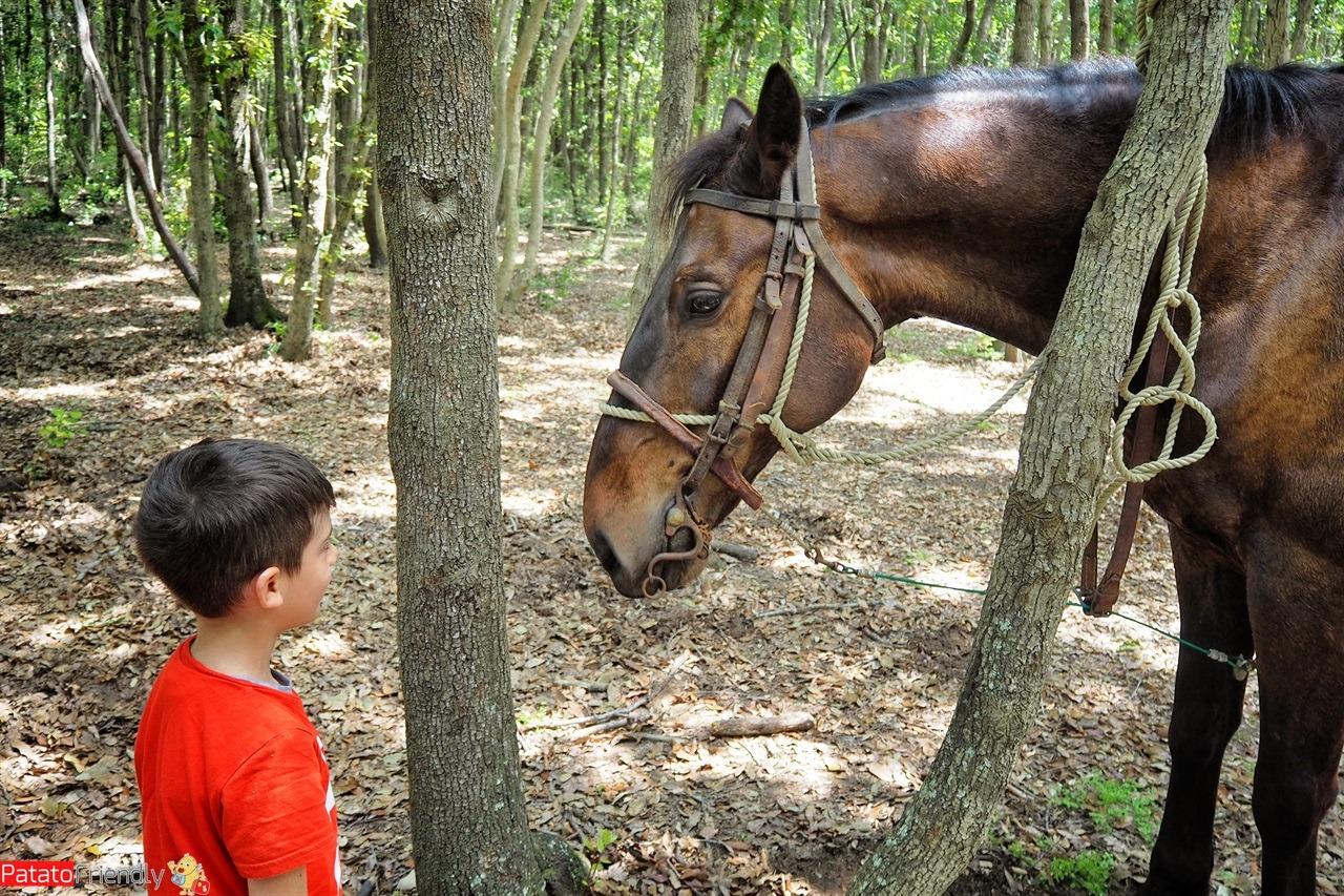 [cml_media_alt id='14426']Viaggio in Maremma - a cavallo[/cml_media_alt]
