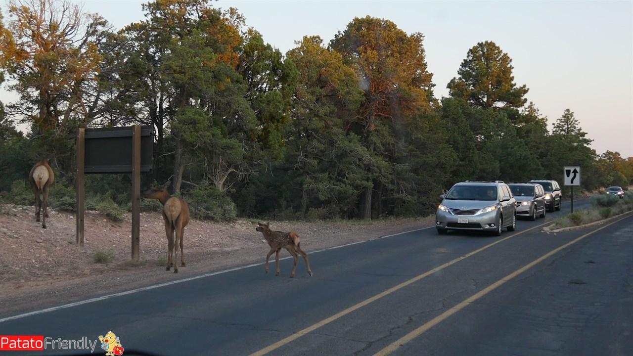 [cml_media_alt id='14204']Vedere gli animali al Grand Canyon coi bambini[/cml_media_alt]