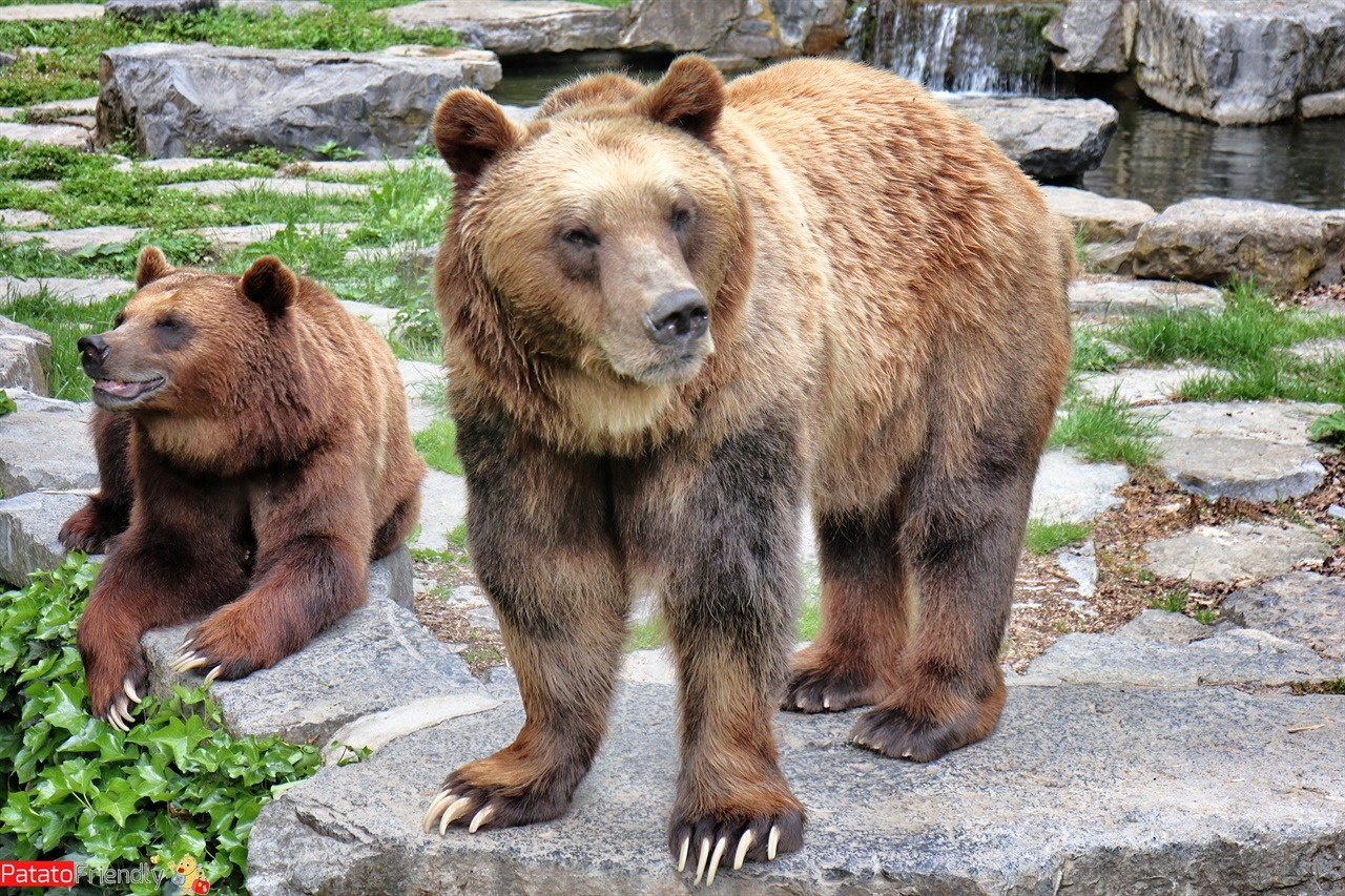 [cml_media_alt id = '14410'] The bears of the Parc Animals at Han in Wallonia [/ cml_media_alt]