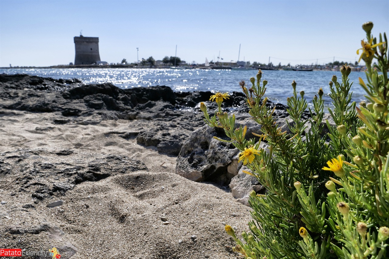 [cml_media_alt id='14726']Itinerario in Salento - Porto Cesareo[/cml_media_alt]