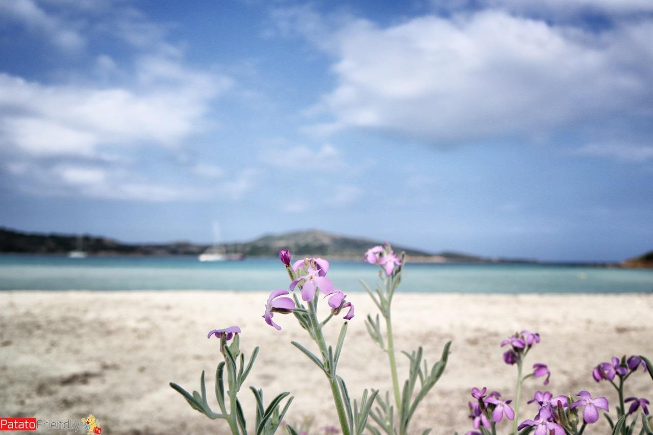 San Teodoro - Cala Brandinchi - più belle spiagge nord Sardegna