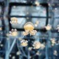 Visita all'Acquario di Genova con i bambini le meduse del Dietro le Quinte all'Acquario