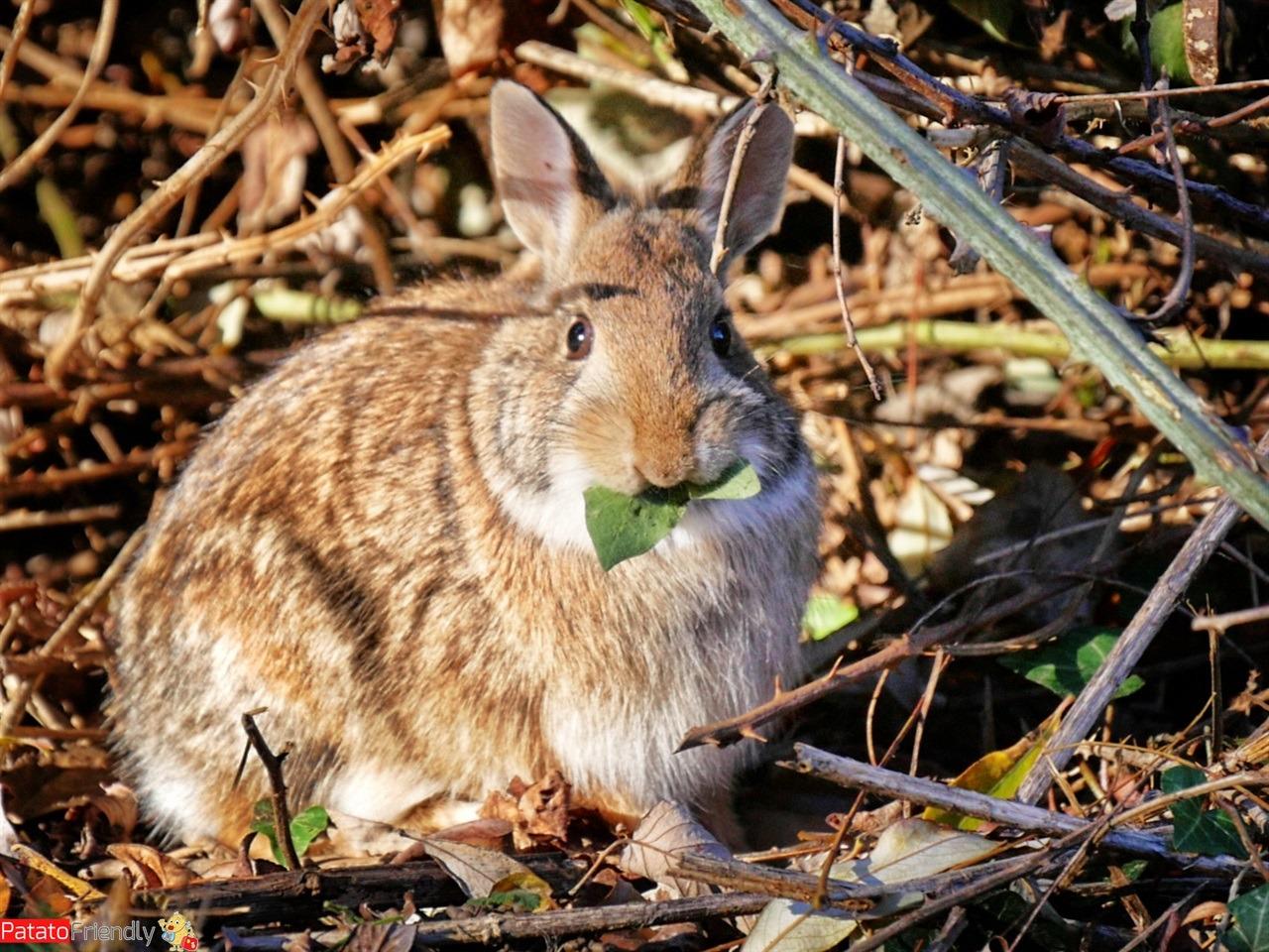 La fauna delle Torbiere del Sebino un coniglio