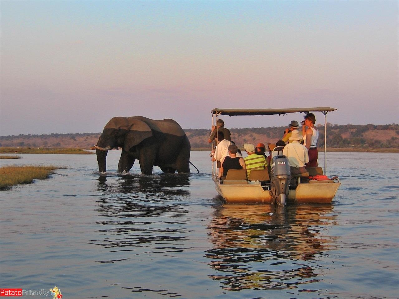 Viaggio in Botswana safari con elefanti